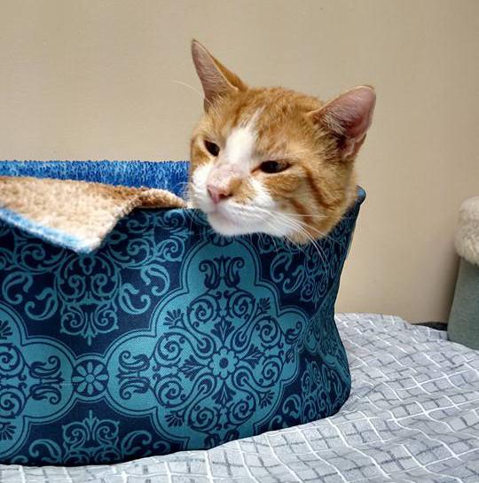 Petco Cat Adoption Process